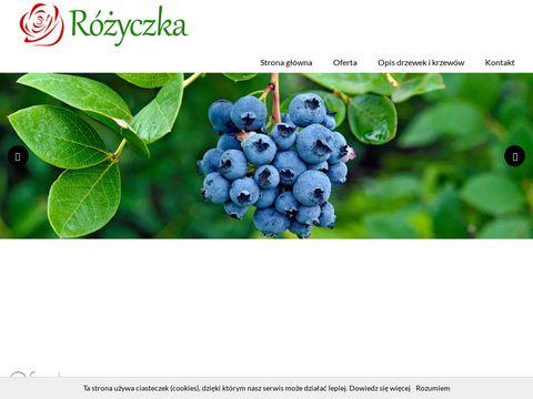 Szkolka-rozyczka.pl